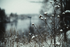 Iisalmi (Tuomo Lindfors) Tags: iisalmi finland rni allfilms suomi takatalvi lumi snow myiisalmi
