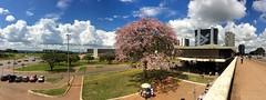 Cloud continuum . . . (ericrstoner) Tags: cloud nuvem silkflosstree paineira ceibaspeciosa ceiba malvaceae brasília distritofederal bancodobrasil bancocentral esplanadadosministérios ministryesplanade