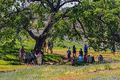 Tourists (Charlie Lee.) Tags: california northerncalifornia norcal 캘리포니아 미국 미국서부 westcoast unitedstatesofamerica usa northamerica tablemountain buttecounty northtablemountainecologicalreserve basalticplateau plateau wildflower vernalpool