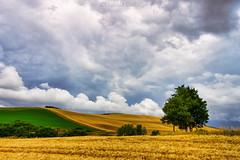 La campagna toscana: Santa Luce (6) - The Tuscan countryside: Santa Luce (6) (Eugenio GV Costa) Tags: approvato toscan toscana campagna nuvole cielo alberi countryside clouds sky trees outside