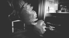 'Tulips'' by Peeano  #photographer #photography #写真撮影 #photographylovers #love #interior #インテリア #家 #青い愛 #青い影 #thekeys #samsungphotography #scifi #anime #instagalaxy #blue #samsunggalaxy #iloveyou #tulips #eyemomentsgraphy #toprepostme #interiorgram #インテリア (Peeano Photography - ピアーノ写真) Tags: love instagalaxy 青い影 cyberpunk 写真撮影 eyemomentsgraphy samsunggalaxys9 interior instainterior claredonfilter tulips photographylovers 青い愛 photographer 本能 scifi インテリア インテリアグラム thekeys iloveyou blue samsunggalaxy toprepostme 家 samsungphotography interiorgram photography anime