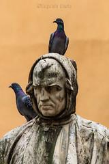 Libero, come un piccione - Free, like a pigeon - (Eugenio GV Costa) Tags: approvato statua piccione statue pigeon