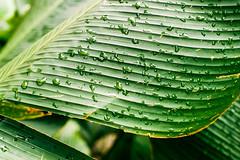 Nature (Thanathip Moolvong) Tags: nikon f100 film fujicolor superia xtra 400