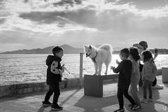 Feeling hungry! (tzevang.com) Tags: sea kids dog dramaticsky bythesea bw greece piraeus