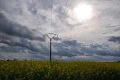 Suivre la ligne (Croc'odile67) Tags: nikon d3300 sigma contemporary 18200dcoshsmc ciel cloud sky nature nuage campagne colza paysage landscape