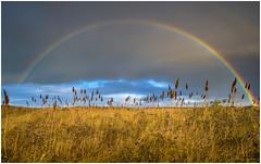Full rainbow at Kwade Hoek Goedereede (Rob Schop) Tags: rainbow kwadehoek landscape weather samyang12mmf20 wideangle field f11 sonya6000 holland lrcc handheld