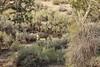 Wyoming Elk Hunt and Mule Deer Hunt 44