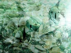 Old Sea Shanty (Lemon~art) Tags: fishes mermaids shells sea underwater green manipulation textures monochrome fantasy