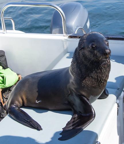 Zeehond aan boord