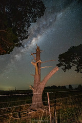 The Quick and the Dead (nightscapades) Tags: astronomy astrophotography currawang galacticcore goulburn marulan milkyway night nightscapes sky southerntablelands stars tirrannaville tree trees stump science australia newsouthwales
