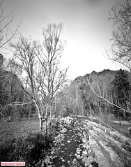 On this Pinhole day (DelioTO) Tags: 6x12 aph09 beaches blackwhite canada curved f175landscape ontario panoramic pinhole r091100 rural snow toned trails spring woods