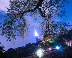 look forward to Shinjuku Gyoen National Garden (sapphire_rouge) Tags: 桜 夜桜 東京 sakura cherryblossom cherry nightcherryblossom hanami illumination 花見 ngc