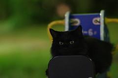 Black Cat (Flexible Negativity) Tags: nuko pentax k70 cat caturday 猫 貓 meow blackcat ねこ