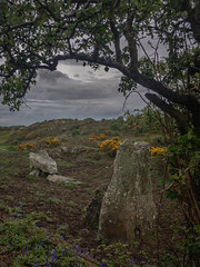 Din Dryfol, Anglesey; Megalithic tomb (apcmitch) Tags: anglesey cycling megaliths landscape northwales