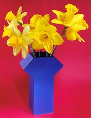 Daffodils, primarily (Markus Jork) Tags: kodak ektar100 4x5 film graflex supergraphic optar203mm daffodils flowers primarycolors