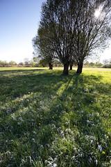 Back in the Nowhere (czerwiony Smãtk) Tags: grass trees meadow sky willows flower spring green sun shadow light canoneos6d canonef1635f4l żuławy polska poland europe europa pomeranian kiezmark