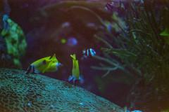 (Just A Stray Cat) Tags: toronto canada ttc ripley ripleys aquarium fish underwater six ontario 6 35mm 35 mm film analog analogue olympus mju ii stylus epic centuria konica minolta 800 expired