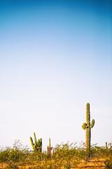 Dragged for Days on End (Thomas Hawk) Tags: america arizona desertbotanicalgarden papagopark saguaro usa unitedstates unitedstatesofamerica cacti cactus desert phoenix fav10