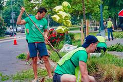 2019.05.04 Vermont Avenue Garden Blooms and Work Party, Washington, DC USA 01811