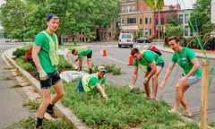 2019.05.04 Vermont Avenue Garden Blooms and Work Party, Washington, DC USA 01796