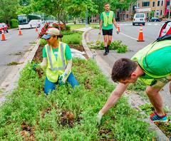 2019.05.04 Vermont Avenue Garden Blooms and Work Party, Washington, DC USA 01799