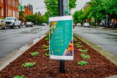 2019.05.04 Vermont Avenue Garden Blooms and Work Party, Washington, DC USA 01950