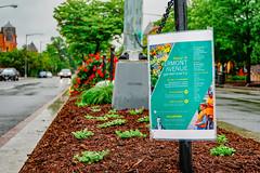 2019.05.04 Vermont Avenue Garden Blooms and Work Party, Washington, DC USA 01952