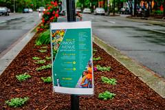 2019.05.04 Vermont Avenue Garden Blooms and Work Party, Washington, DC USA 01953