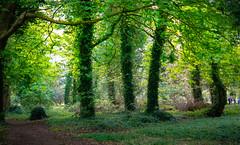Fresh green in St. Anne Dublin Park (Carl Terlak) Tags: green apsc zeiss nex6 ireland