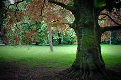 Old Oak (Carl Terlak) Tags: apsc zeiss exposure nex6 emount ilce ireland old b