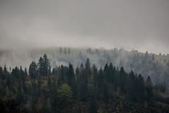 Steamy Hills (Carl Terlak) Tags: hills apsc sony mist fog steam nex6 carpathia sigma