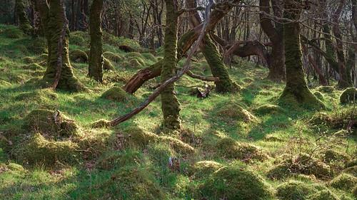 Lumpy Woodland