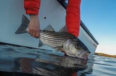 G0020926-1 (Woozy Fishing) Tags: eastgreenwich rhodeisland unitedstatesofamerica