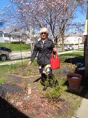 Could This Be Spring? (Laurette Victoria) Tags: spring woman laurette garden blonde purse sunglasses