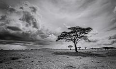 Storms over Serengeti (MWVVerb) Tags: 2017 october serengeti tanzania
