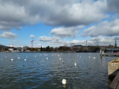 Swan lake (sander_sloots) Tags: zürich lake zürichsee meer swans zwanen clouds cityscape wolken cranes kranen reuzenrad wheel ducks birds lumix panasonic dctz90 city stad water zwitserland switzerland kade quaibrücke see