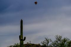 Aviators (Daren Grilley) Tags: cactus saguaro phoenix bird balloon fuji fujifilm xt3 100400 hot air desert