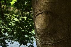20190503_006_2 (まさちゃん) Tags: 三ツ池公園 ハムサ 目 眼