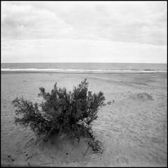 Playa (mavricich) Tags: monocromo monocromático mañana film película plaza lluvia sol playa kiev 6x6 6c lomography pinamar planta mar argentina agua arte square