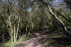 Walberswick 6 (pocahontas1975) Tags: walberswick southwold suffolk walk sun river sea coast england