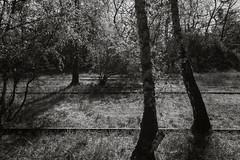 IMG_4229 (ickeliv) Tags: naturpark südgelände berlin germany