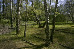 IMG_4228 (ickeliv) Tags: naturpark südgelände berlin germany