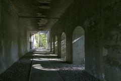IMG_4195 (ickeliv) Tags: naturpark südgelände berlin germany