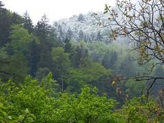 Letzter Schnee ?! / Last snow ?! (ursula.valtiner) Tags: wald wood forest bäume trees schnee snow mai may frühling spring flatz niederösterreich loweraustria austria autriche österreich