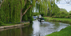 Cruising (Blue Sky Pix) Tags: shardlow weepingwillow canal trentandmersey towpath barges gardens waterside derbyshire england pentax