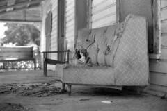 Seating Arrangements (macromary) Tags: analog florida foma fomapan fomapan100 blackwhite analogphotograph bw blackandwhitefilm filmcamera film mechanicalcamera vintage vintagecamera rodinal 35mm nikkor 50mm 50mmlens 35mmfilm f14 nikonf100 f100 nikon putnamcounty monotone chair porch southern urbex rurex flurbex abandoned derelict seat porchchair