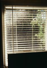 Window blinds (Matthew Paul Argall) Tags: toweronetwentyflash fixedfocus 120film 120 mediumformat lomographyfilm 100isofilm boxcamera