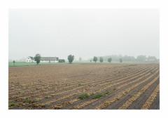 Söderslätt - Kodak Ultramax 400 (magnus.joensson) Tags: sweden swedish harvest fog haze söderslätt autumn september chinon 1000s supertakumar 55mm kodak ultramax 400 c41 sunrise m42