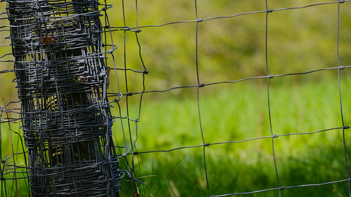 Fence Wire Beside The Path