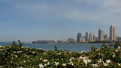 'City On The Bay' (Rand Luv'n Life) Tags: odc our daily challenge downtown san diego california skyline buildings disney ocean liner bay water view coronado ferry landing flowers plant sky clouds panorama